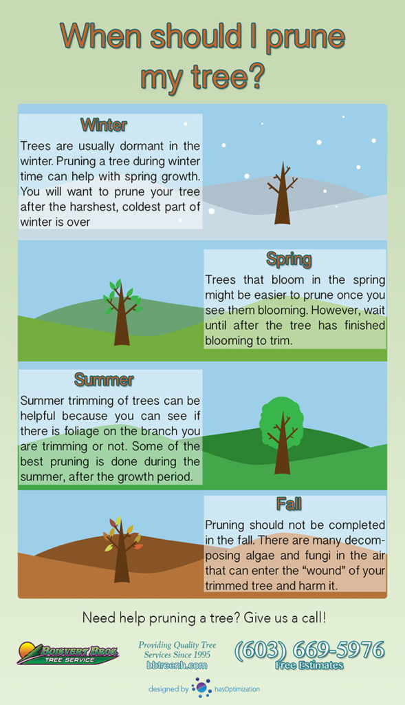When to trim a tree pruning infographic