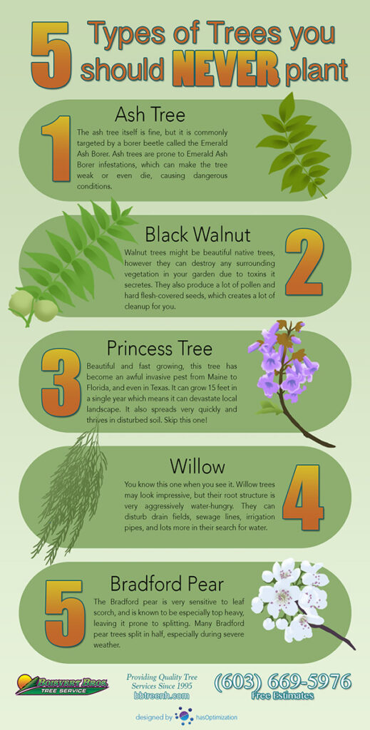 Never plant these 5 trees